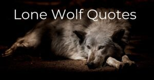 Read more about the article Top 20 Lone Wolf Quotes to Inspire You with Images